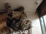 "Корм сухой Royal Canin ""British Shorthair Adult"", для британских короткошерстных кошек старше 12 месяцев, 2 кг #2, Салмина Галина Геннадьевна"