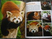 Моя большая книга о животных   Куйе Наталья #1, Анастасия