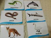 Росмэн Обучающие карточки Животные #1, анастасия