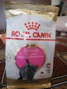 """Корм сухой Royal Canin """"British Shorthair Kitten"""", для британских короткошерстных котят в возрасте от 4 до 12 месяцев, 400 г #14, Бражниченко Александра"""