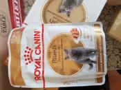 """Консервы Royal Canin """"British Shorthair Adult"""", для кошек британской породы старше 12 месяцев, мелкие кусочки в соусе, 85 г, 12 шт #12, Елена"""