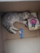"""Корм сухой Royal Canin """"British Shorthair Kitten"""", для британских короткошерстных котят в возрасте от 4 до 12 месяцев, 400 г #15, Бражниченко Александра"""