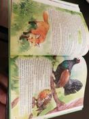 Чудесное путешествие Нильса с дикими гусями #28, Петрова Надежда