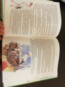 Чудесное путешествие Нильса с дикими гусями #29, Петрова Надежда