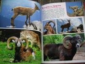 Моя большая книга о животных   Куйе Наталья #9, Анастасия