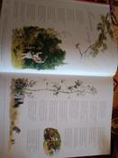 Архив Мурзилки. Том 2. В 2 книгах. Книга 1. Золотой век Мурзилки. 1955-1965 #5, Мила из Тольятти
