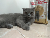 """Корм сухой Royal Canin """"British Shorthair Adult"""", для британских короткошерстных кошек старше 12 месяцев, 2 кг #15, Смирнов Денис"""