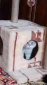 "Корм сухой Royal Canin ""British Shorthair Kitten"", для британских короткошерстных котят в возрасте от 4 до 12 месяцев, 400 г #6, Марина Г."