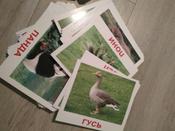 Обучающая игра Вундеркинд с пеленок Карточки Домана Дикие животные #4, Елена Д.