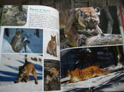 Моя большая книга о животных   Куйе Наталья #3, Анастасия