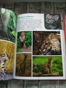 Моя большая книга о животных   Куйе Наталья #8, Анастасия