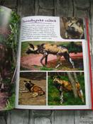 Моя большая книга о животных   Куйе Наталья #7, Анастасия