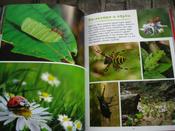 Моя большая книга о животных   Куйе Наталья #10, Анастасия