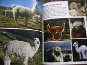 Моя большая книга о животных   Куйе Наталья #4, Анастасия
